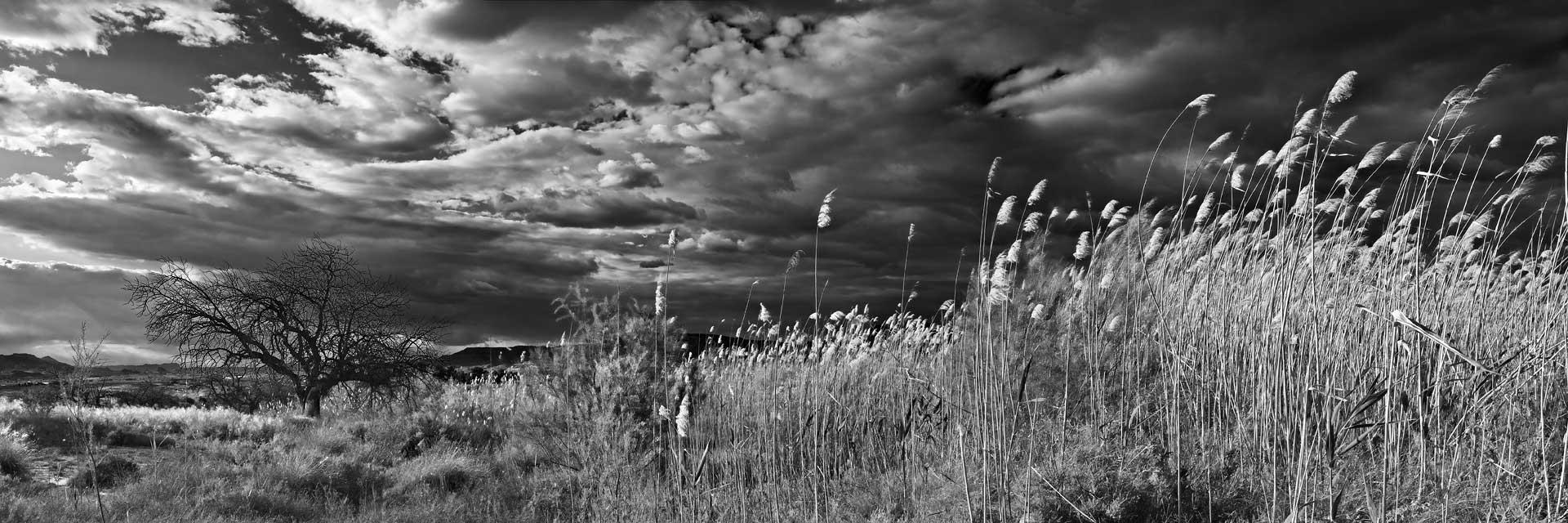 Fotografía de Manuel Portillo: paisaje con cañas y algarrobo muerto
