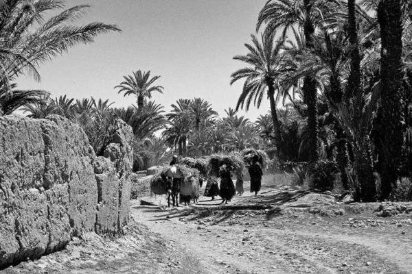 Mujeres en oasis